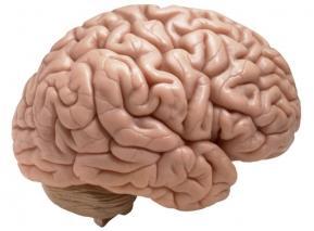 Может ли мозг оставаться молодым?